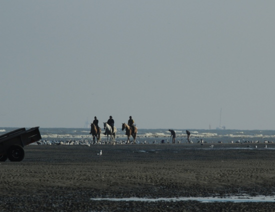 Clam diggers and horse lovers alike at the Belgian coast